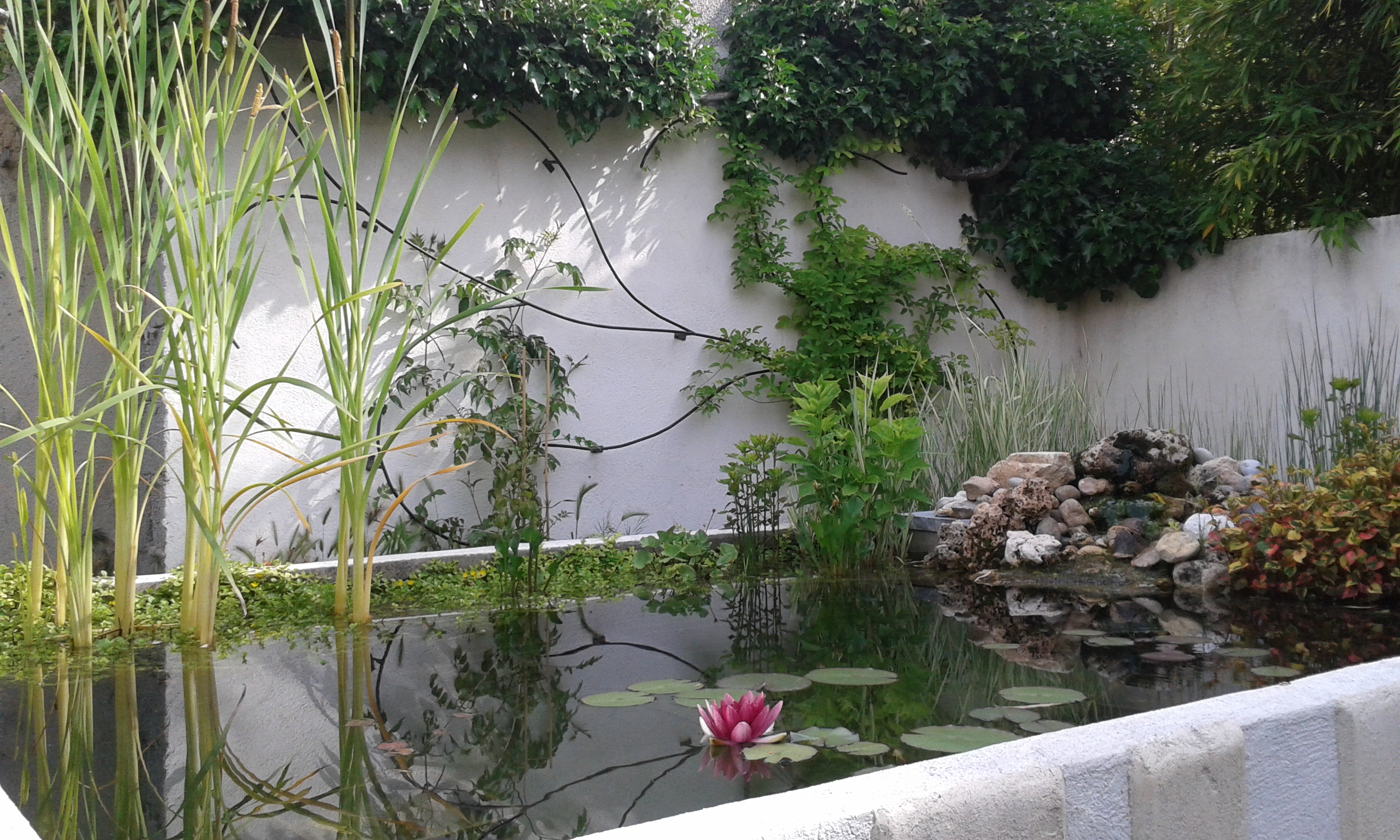 Le jardin chambres d 39 h tes de charme aix en provence - Plantes bassin de lagunage aixen provence ...